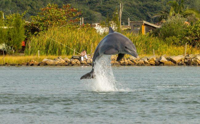 Conversation avec les dauphins - Idéacom International
