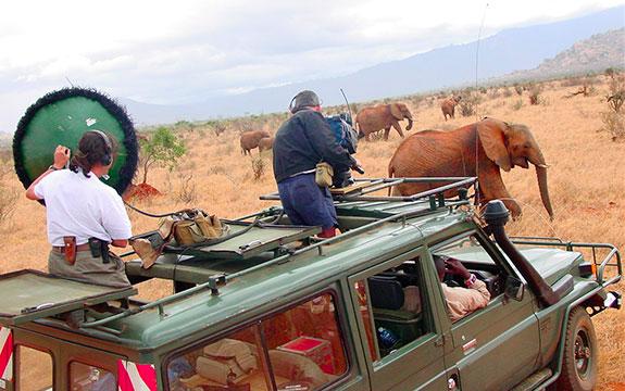 Le Dernier Safari et Caméras Sauvages - Idéacom International